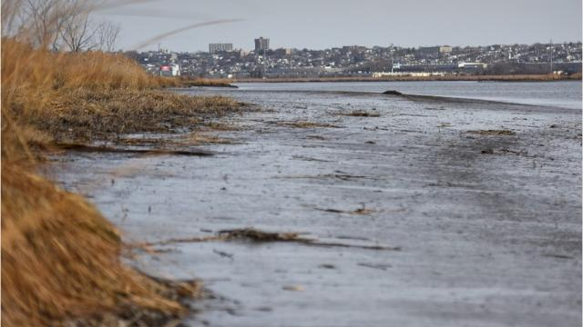 Hackensack sediment laced with contamination