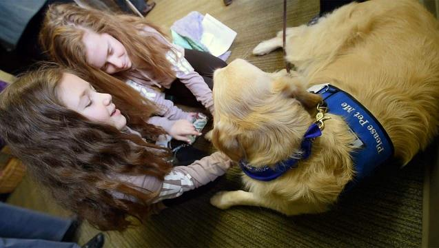 Watch: Comfort dogs soothe national tragedies