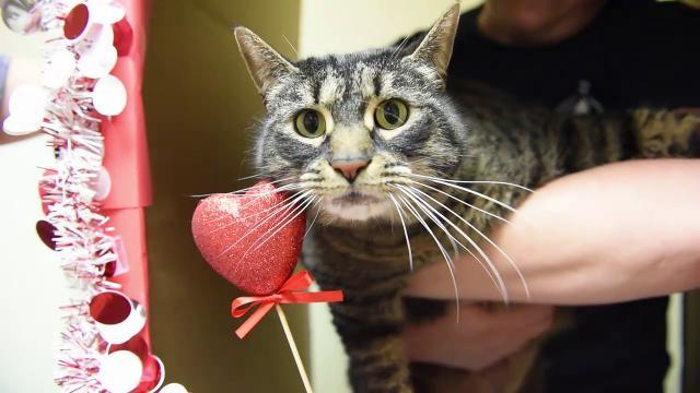 Watch: Pets of the Week 5 cats and 1 dog