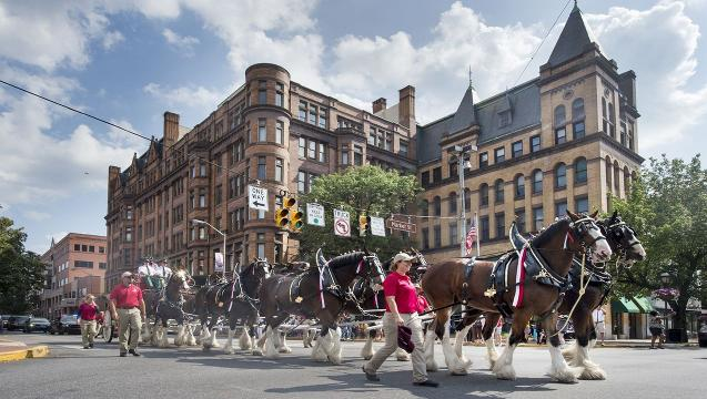 Budweiser Clydesdales parade through York