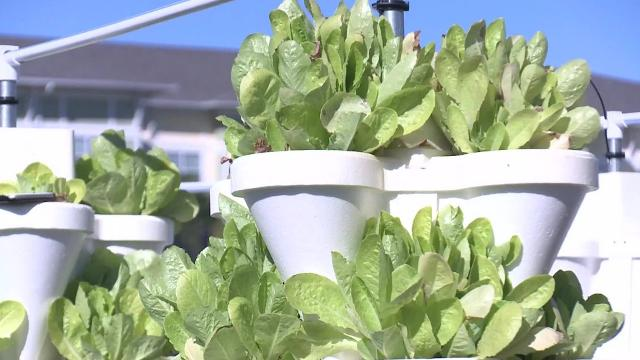 Students From Millennia Gardens Elementary Donate Lettuce To Sea World