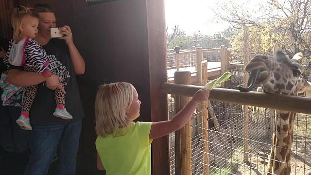 Feeding the Giraffes on spring break