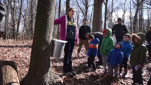 Video:Maple Sugaring program at Tenafly Nature Center