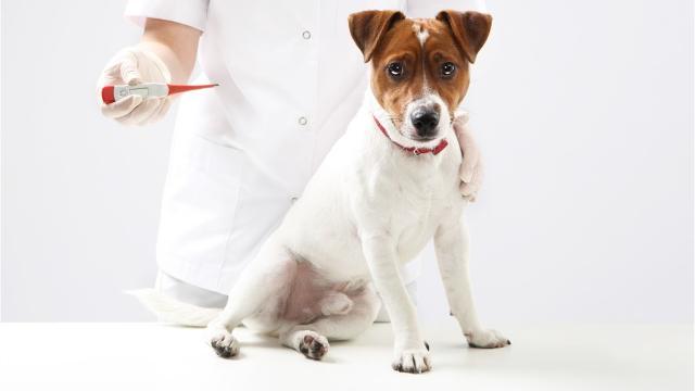Paramus vet hospital warns of fatal dog disease