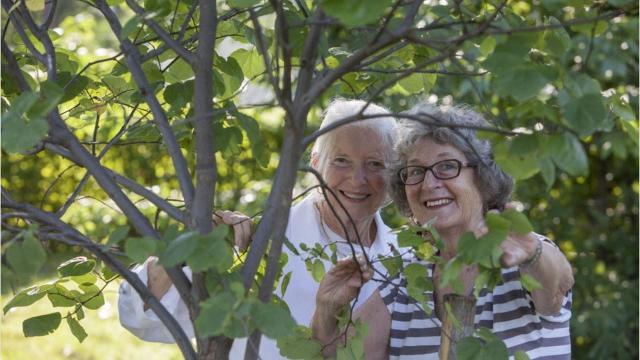 A Teaneck program allows residents to plant trees in honor of loved ones.