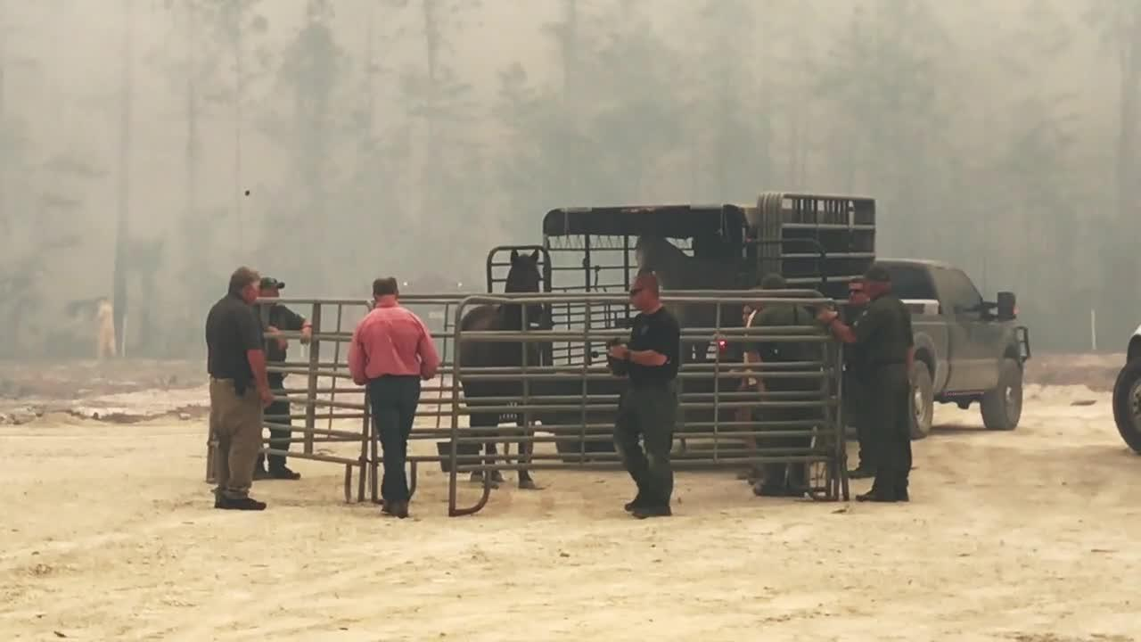Horse rescue during brush fire