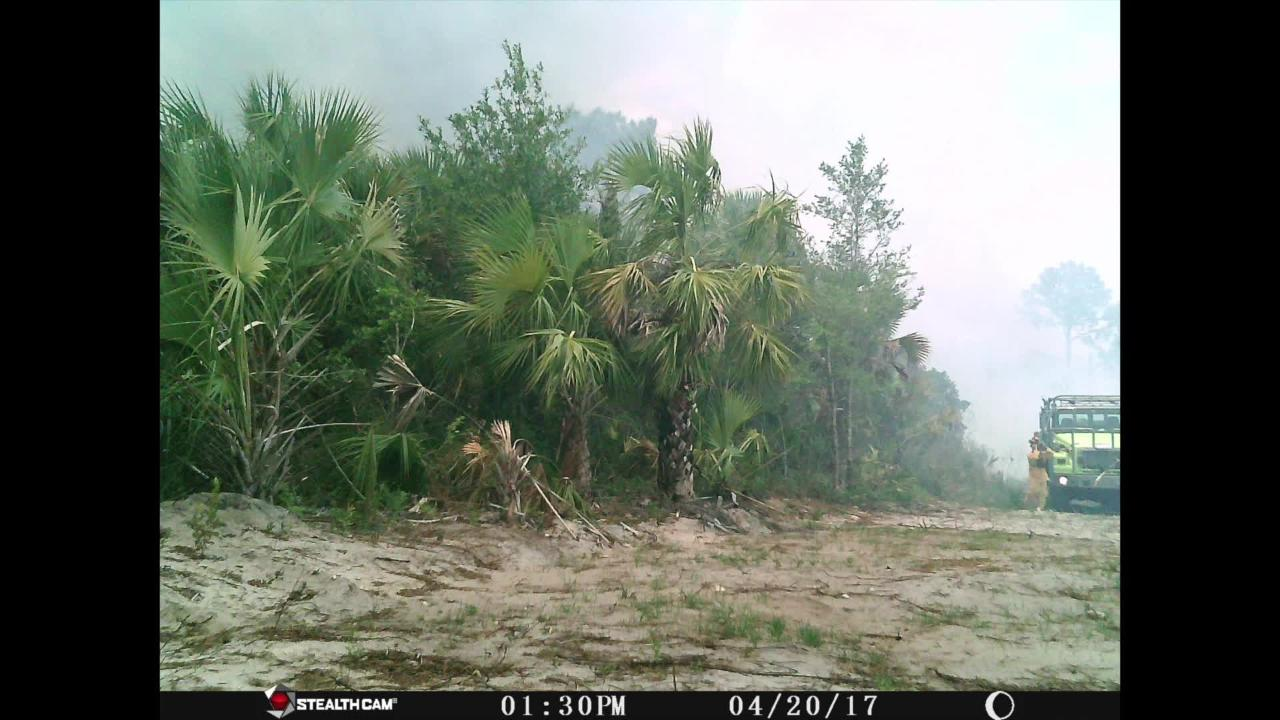 Brush fire trail cam - Everglades Blvd on Thursday, April 21