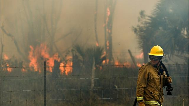 Video: A look at Florida's brush fires