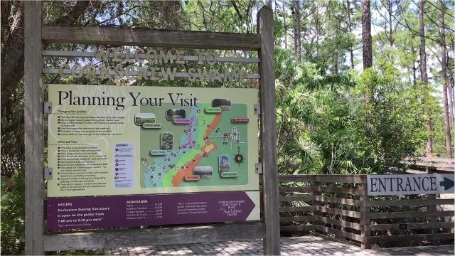 Spot alligators at Audubon Corkscrew Sanctuary