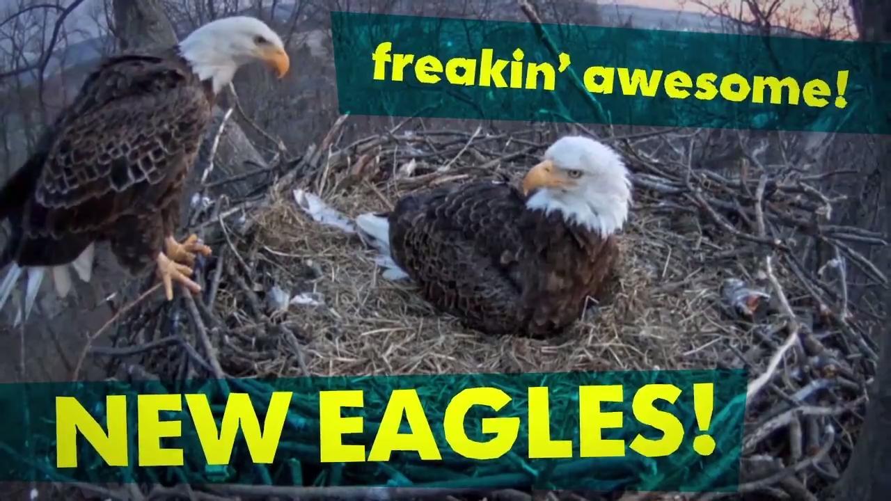 bald eagles rescued along susquehanna river