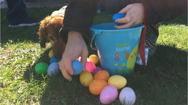 Looking for an Easter egg hunt in the area? Hunt no further.