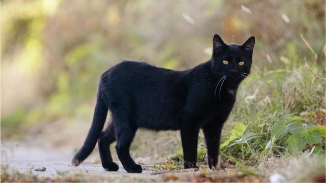 Cornwall cracking down on feral cat feeding