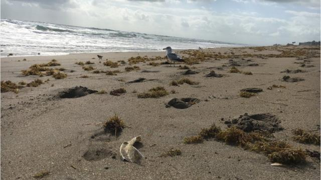 There's a lot of trash on Treasure Coast beaches, but who's to blame? It's not the folks on that passing cruise ship. (DACIA JOHNSON/TREASURE COAST NEWSPAPERS)