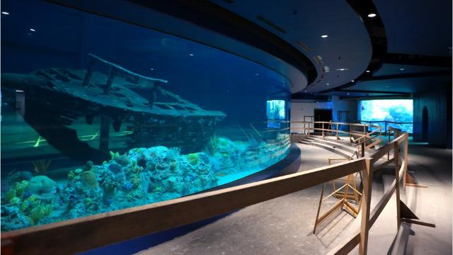 Work on the Texas State Aquarium's $56 million 65.000-square-foot Caribbean Journey expansion continue as the grand opening is scheduled for May 13.