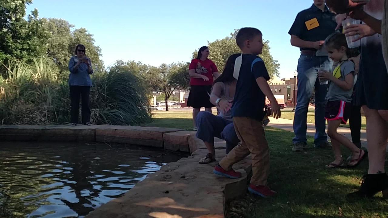 Hardin-Simmons University's youngest students, part of a program in the education department to train future early childhood educators, release some mosquito-eating fish into the school's pond Thursday