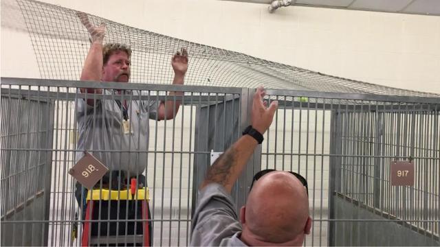 No más de ruffin' en Simi refugio de animales después de las actualizaciones de Ventura County Star 1